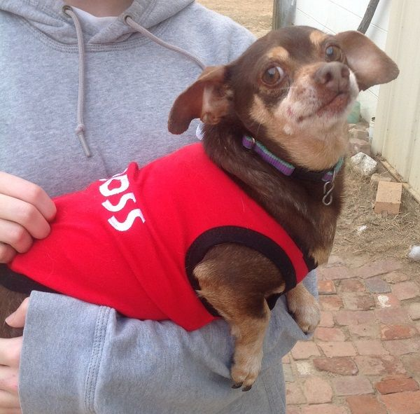 Chihuahua Dog For Adoption In West Columbia Sc Adn 756974 On