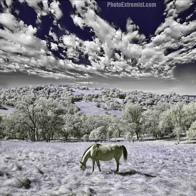 Infrared Horse by Photo Extremist on Flickr.