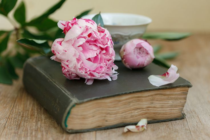5 книг, которые нужно прочитать каждой женщине!
