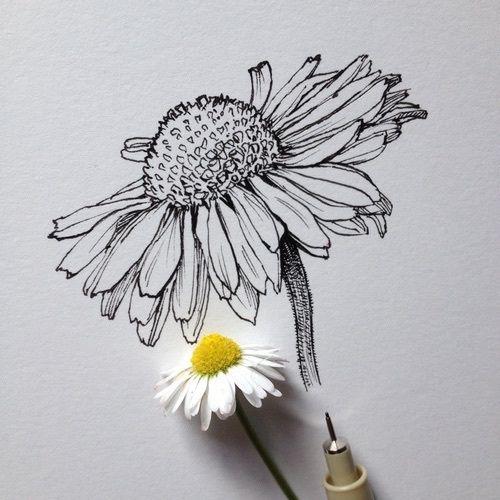 cute, drawing, drawings, flower, flowers, grunge, indie, love
