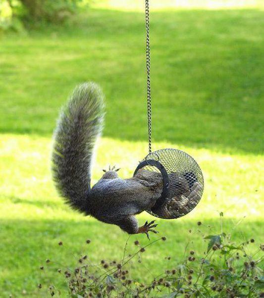 A Stuck Squirrel?