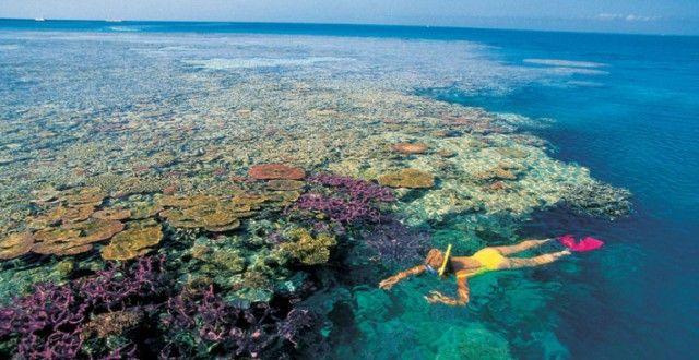 A teljes ökoszisztéma összeomlott a Nagy-korallzátony egyes részein ausztrál kutatók szerint - Alternatív Energia