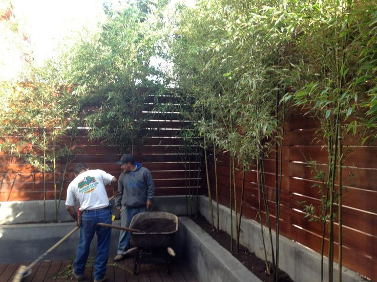 Best 25+ Bamboo Privacy Fence Ideas On Pinterest | Bamboo Fencing Ideas,  Bamboo Screening Plants And Bamboo Screen Garden
