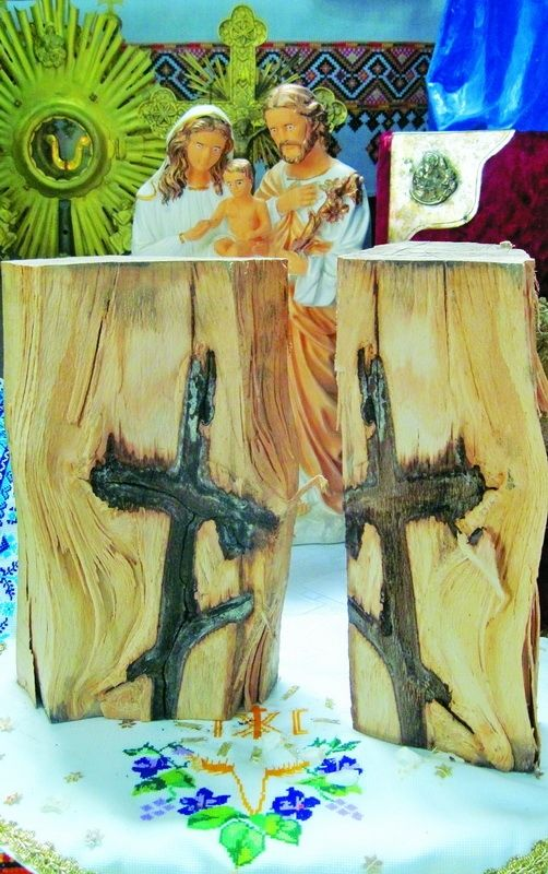 Хрест у серцевині старого бука.  До унікальної лісової знахідки у віддалене село потягнулися паломники #WZ #Львів #Lviv #Новини #Життя  #дерево #Львівщина #хрест