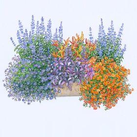 Balkonkasten-Set 'Feurige Mischung' (Pack./6 Pflanzen) günstig online kaufen - MEIN SCHÖNER GARTEN