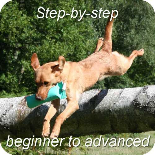 gun dog training for beginners