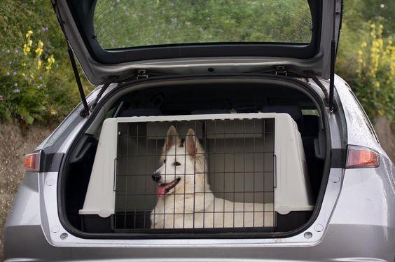 chien cage transport voiture