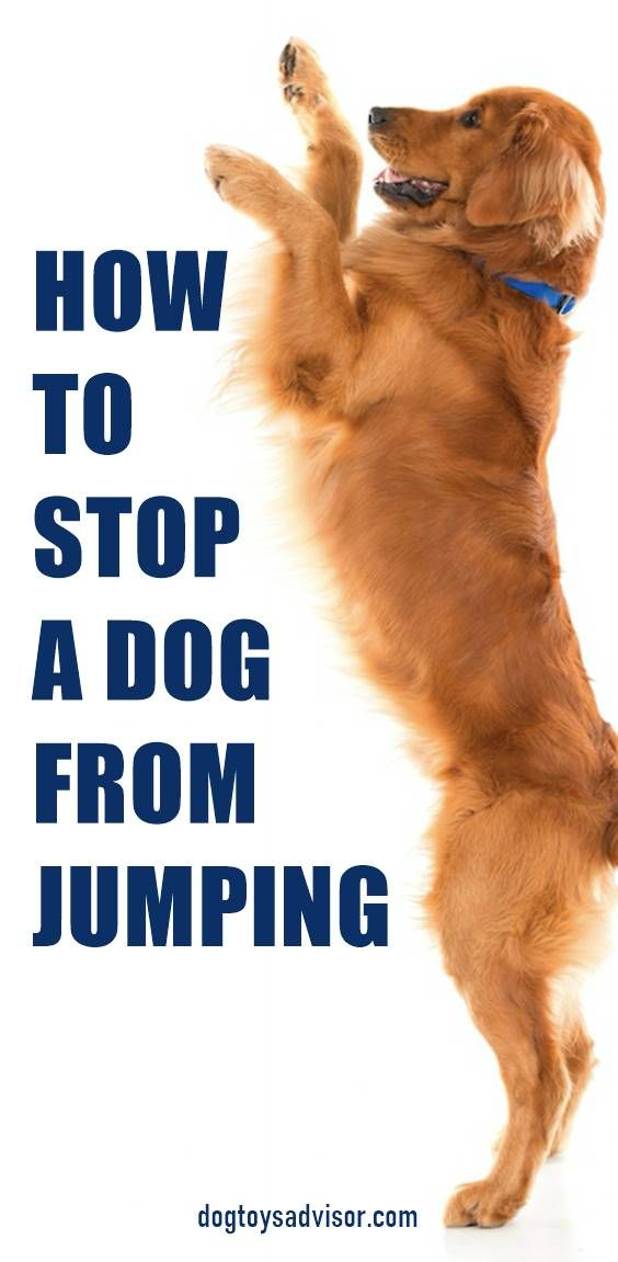 Does Your Dog Jump Up You Or Other People Your Dog Is Likely To