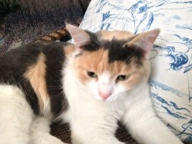 Kallie's life was saved after being trapped in a tree for 4 days out in the cold. A real happy ending for this kitty.