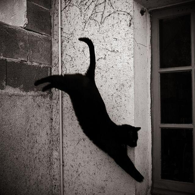Black cats!