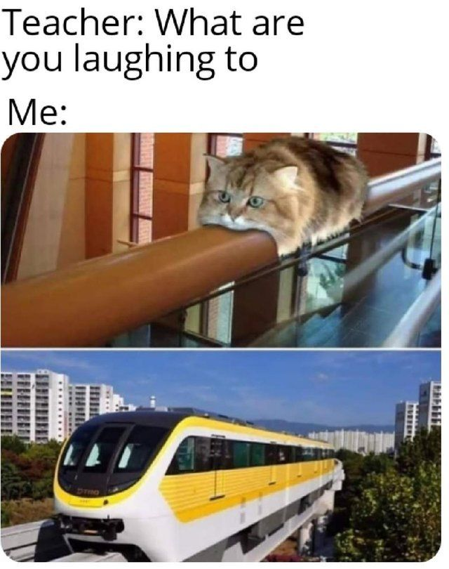 Trainer: what are you laughing to.   #cats #catmemes #humorous #funnymemes #memes