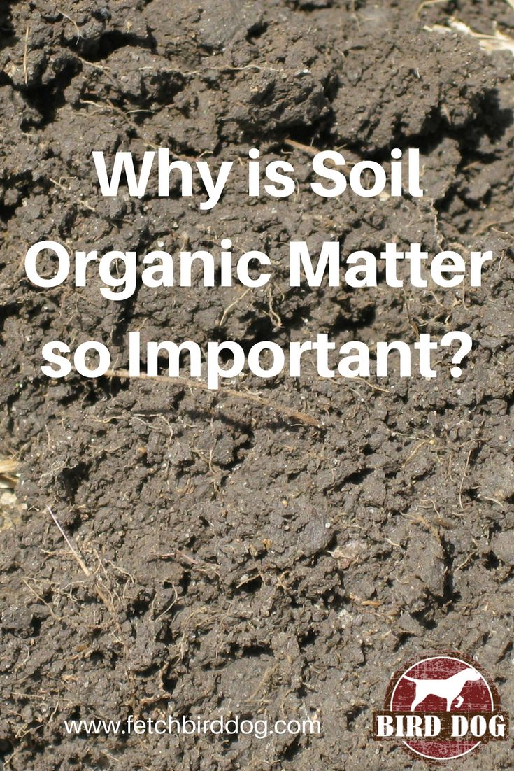 What is soil organic matter and what are the benefits of having it in your soils?