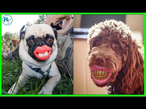 Most Funniest Photos of Dogs with Teeth Balls