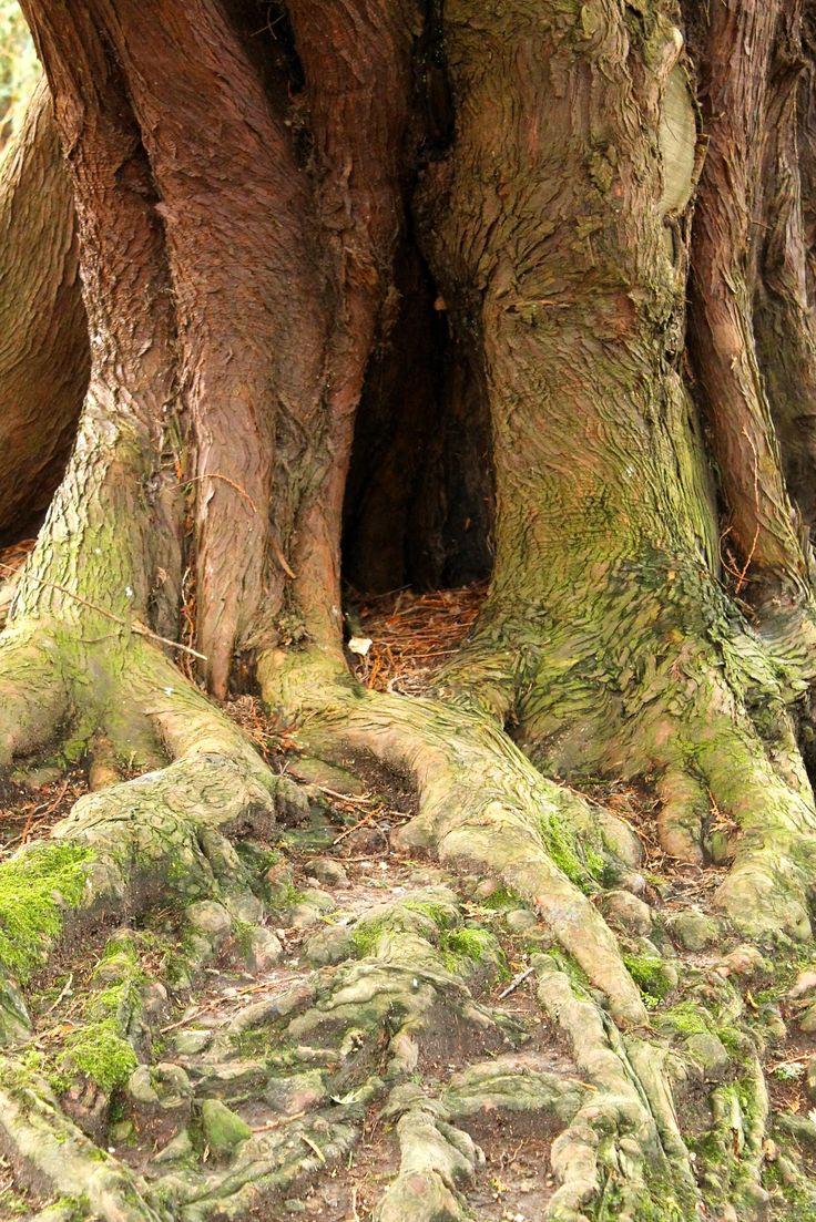 Where fairies live. Balloch, Scotland