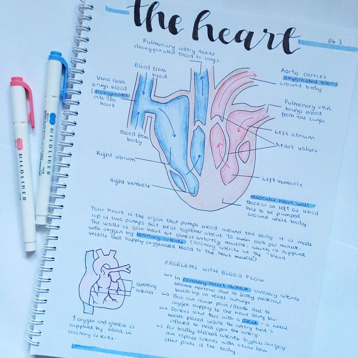 Biology - The Heart   Science notes, Gcse science, Study ...