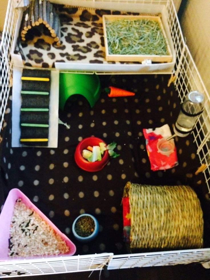 Diy c c cage for my guinea pigs skittles and lucky for Where to get c c cages
