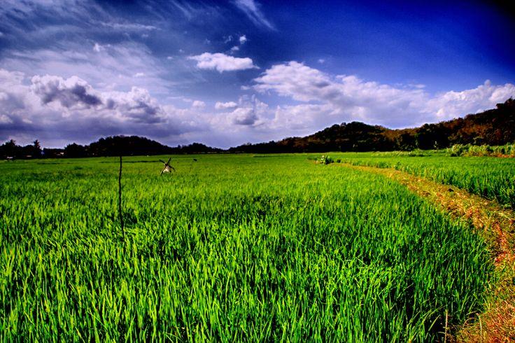 Landscape : Imogiri