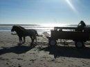 Horse Driven Cart
