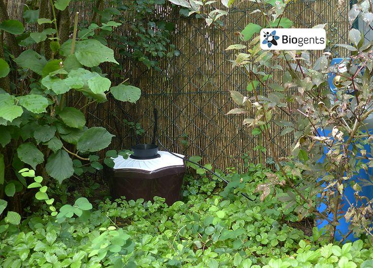 Eine Falle gegen Mücken: Die umweltfreundliche BG-Mosquitaire CO2 Mückenfalle reduziert bei richtiger Platzierung die Mückenpopulation im Garten. Die Technologie dazu wurde in 16 Jahren Forschung an der Universität Regensburg entwickelt. Beispiel für eine gute Platzierung im Garten: schattig und windgeschützt.