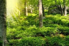 Image result for forest bushes