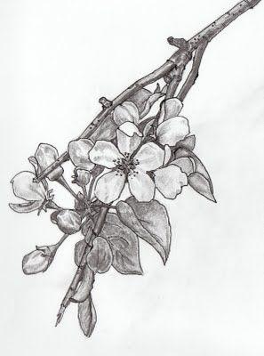 Elise Eiffe: Apple Blossom. Ar state flower.