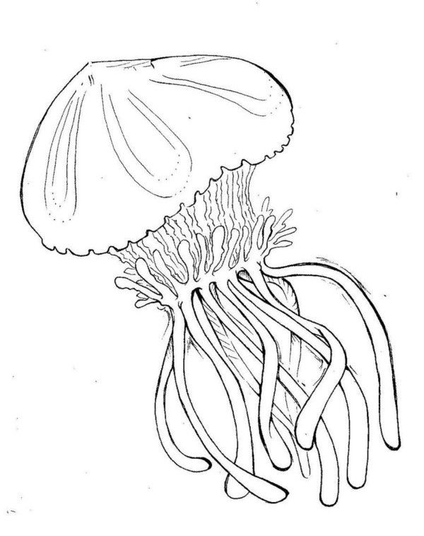 nims island coloring pages - photo#15