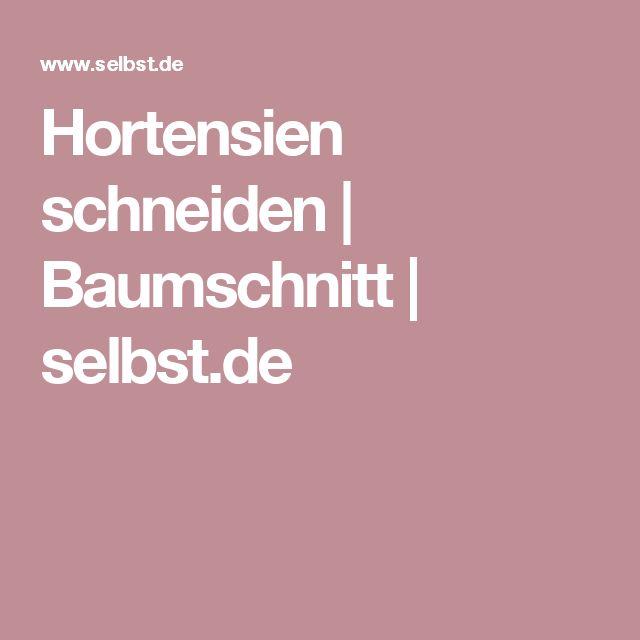 Hortensien schneiden   Baumschnitt   selbst.de