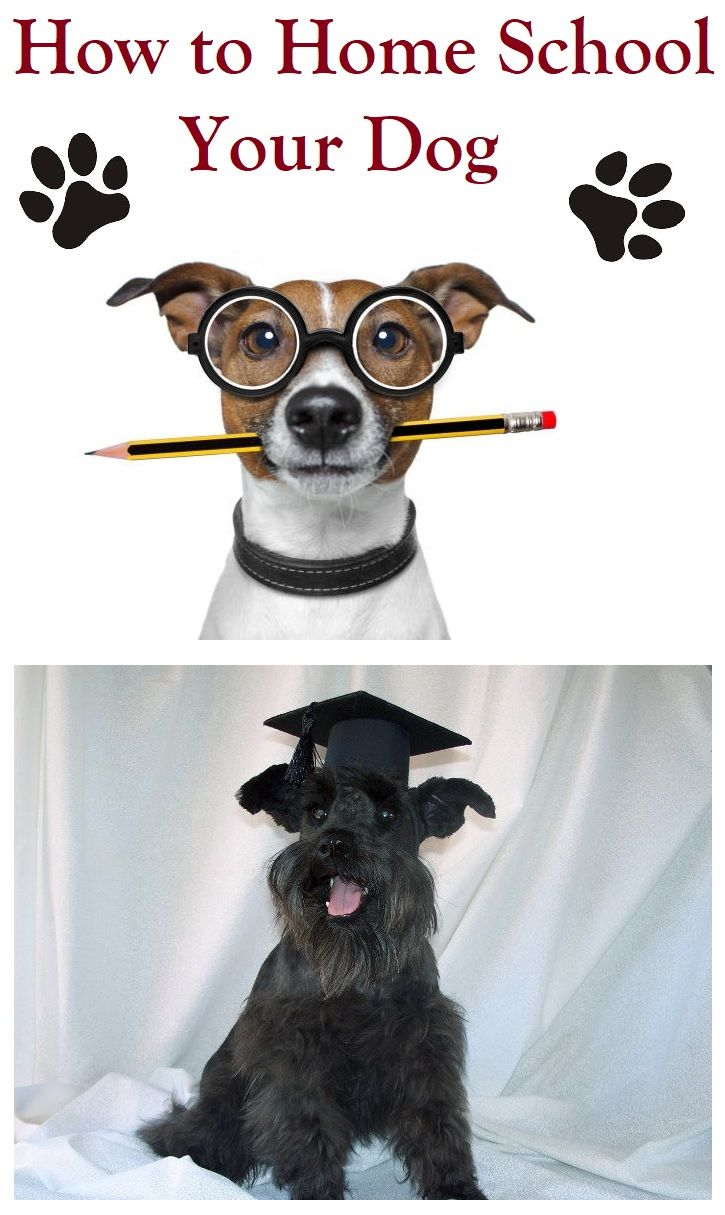 Your Dog Can Become Smarter Through Home Schooling Smart Dog