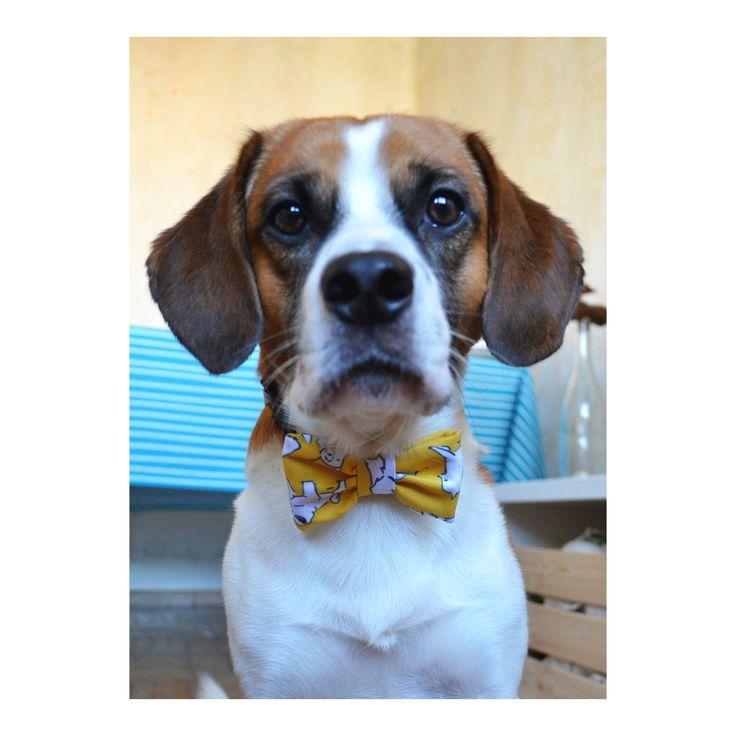 ISABEL HARGOUES Confección a medida / Patronaje www.isabelhargoue... ----------------------------------------- Pajarita para perro  /  dog bowtie