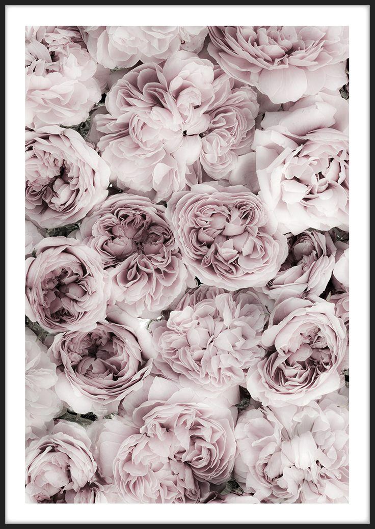 Pink Rose Bed, från Insplendor tryckt med Giclée Fine Art Print-teknik