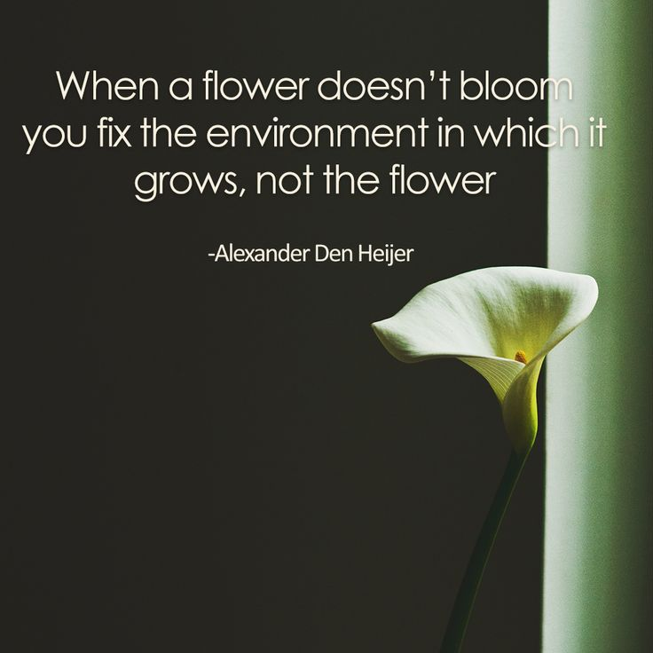 """When a flower doesn't bloom you fix the environment in which it grows, not the flower"" From The Best Unexpected Community"