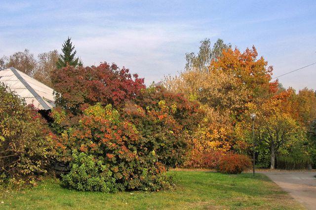 Осенний карнавал. Добавить красок саду могут не только цветы, но и листья | Сад | Дача | Аргументы и Факты