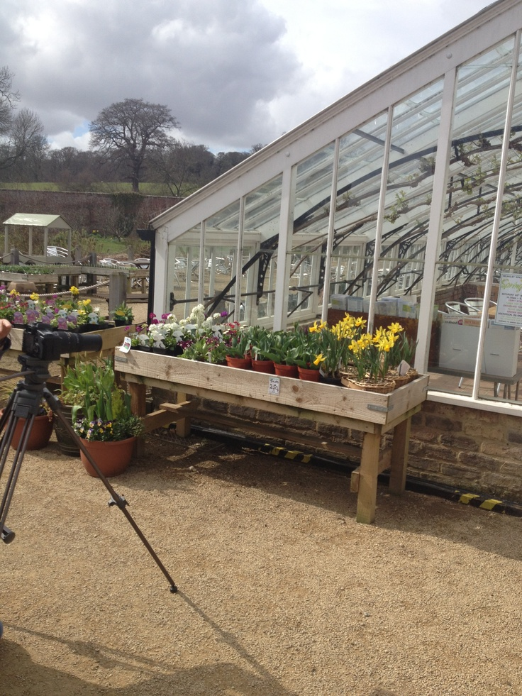 Capturing daffodils at Helmsley Walled Garden