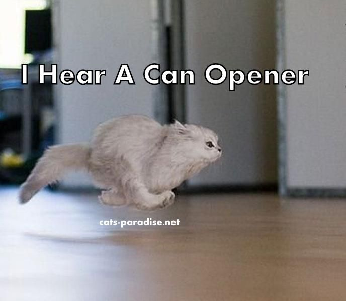 Can opener!!!!!!!!