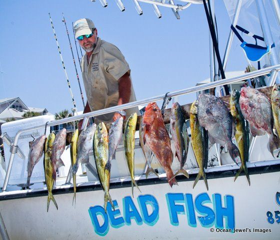 32 best images about love monkey vrbo 176770 on for Best deep sea fishing panama city beach