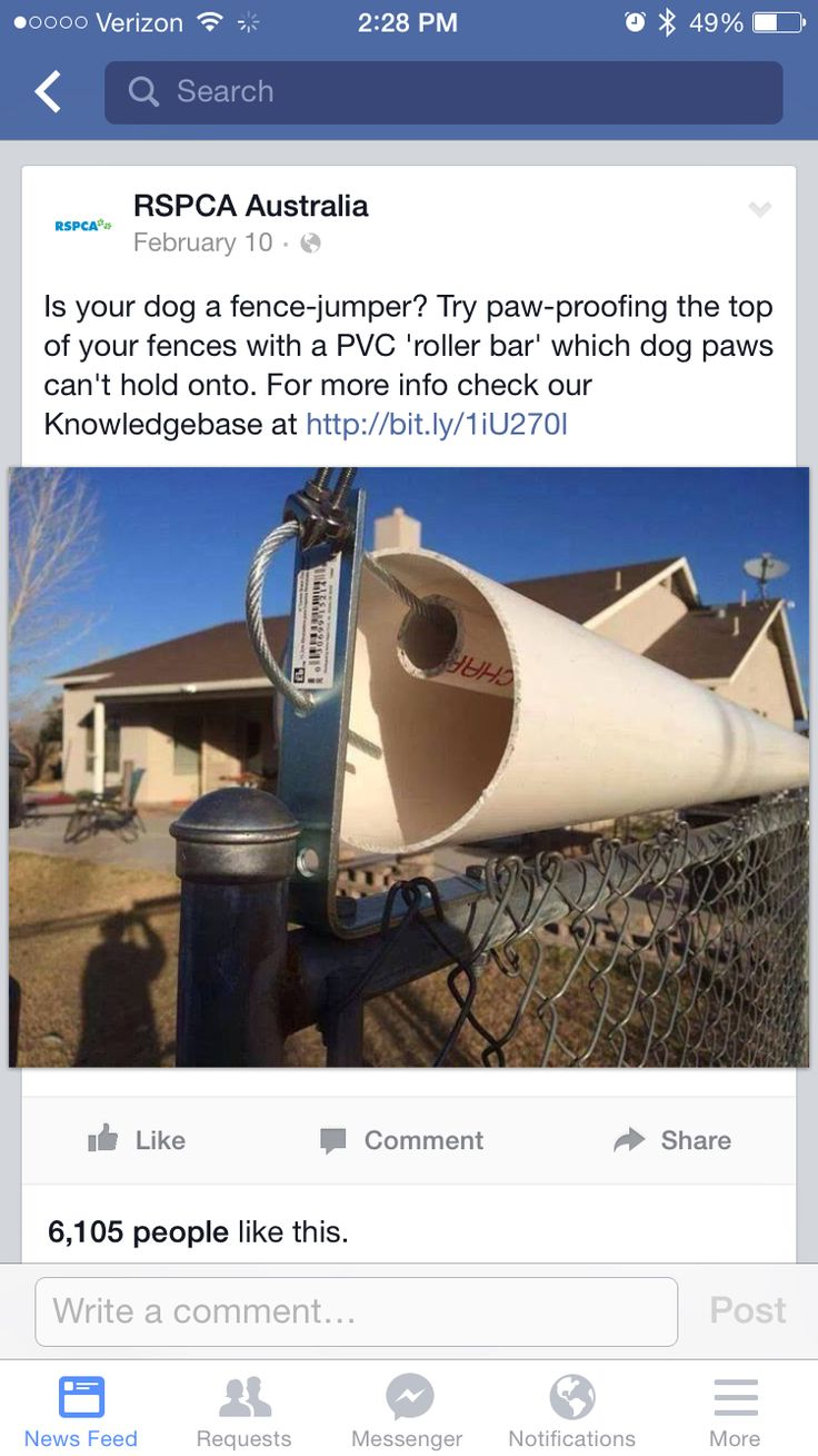 How to keep dog from jumping fence, DIY cheap and easy