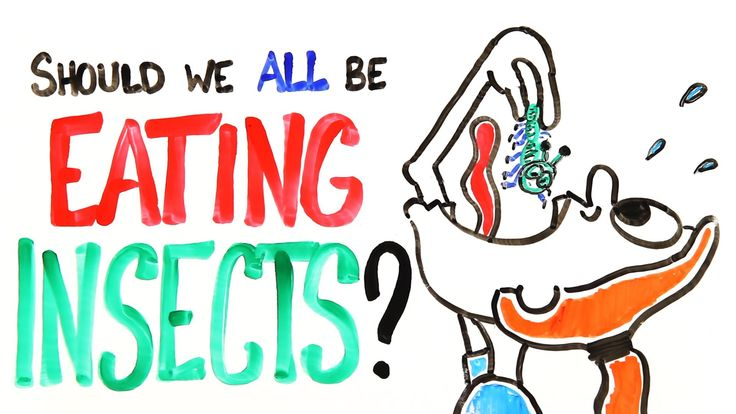 Hey Vegans: Should We All Be Eating Insects? #food #science #insects