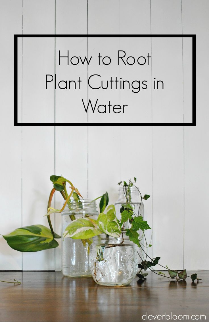 How to root plant cuttings in water plants cuttings and for Eco indoor garden house