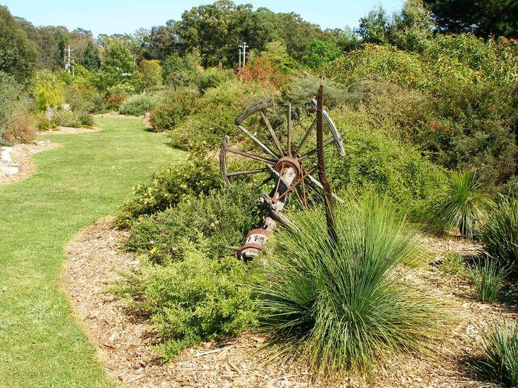 1495 best australian native gardens images on pinterest