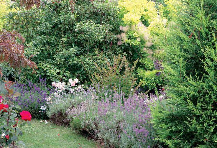 Pour un jardin presque sans entretien, une plantation dense à ...