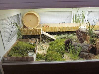 Naturnahe Hamstergehege: Schöner wohnen: Gehegewand mit 4 Gehegen a 148x65