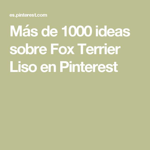 Más de 1000 ideas sobre Fox Terrier Liso en Pinterest