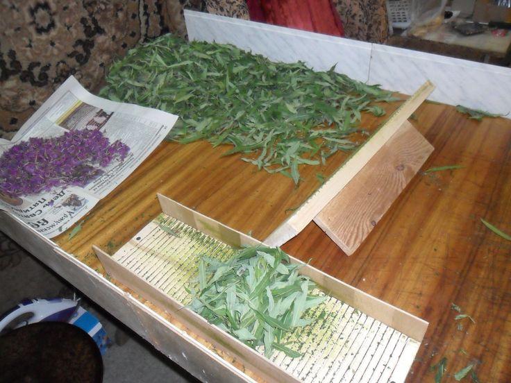 """Так называемый """"станок Кулибина"""". Подвяленные листья помещаю между двух рифлёных досок и прокатываю несколько раз до получения своеобразных """"сигар"""""""