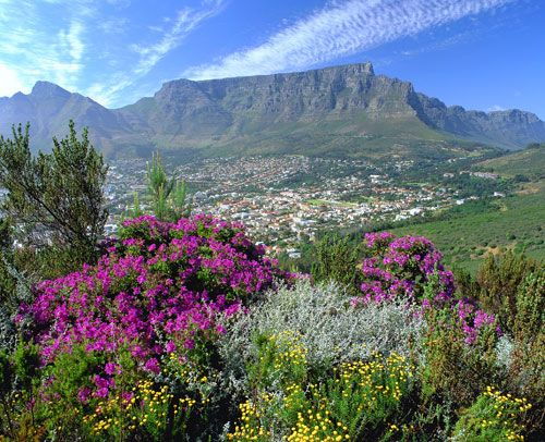 Cape Town is breath taking and only an hour from Franschhoek home of La Clé des Montagnes - luxury villas on a working wine farm.