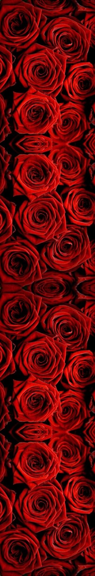 I'd want #MyFabValentine to get me a bunch of red roses. Red always makes me feel confident just like he do !          Happy Valentines!