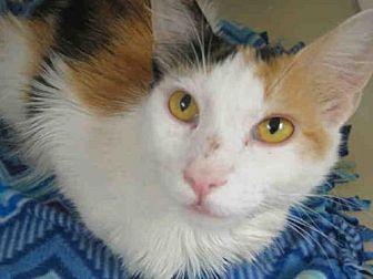 Domestic Mediumhair Cat for adoption in Orange, California - RUTHIE