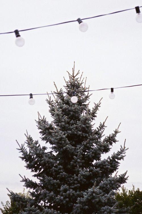 ~ Fir tree ~