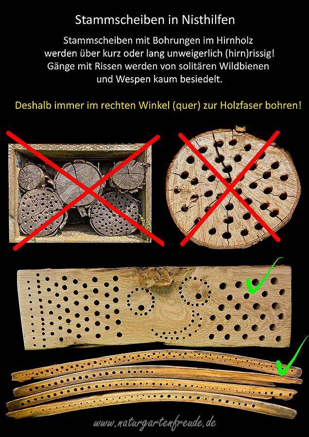 Schautafel Stammscheiben Baumscheiben Bohrungen im Hirnholz Risse Rissbildung Hartholz Hartholzklotz Nisthilfen Insektennisthilfen Insektenhotel