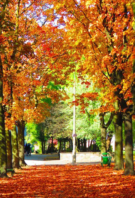 Poznań Poland, Park Górczyński [fot.Nina Dardas]