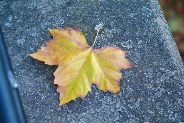 Autumn's signature